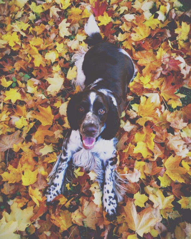 Autumn by Babes in Boyland