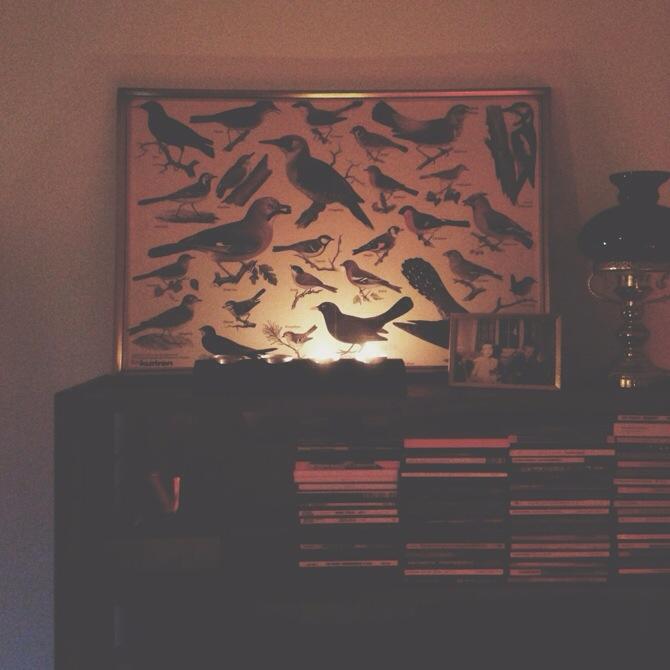 Birds by Babes in Boyland
