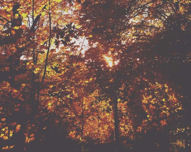 BIB_autumn3.jpg