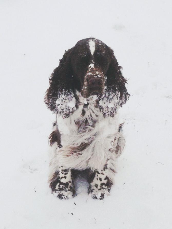 blixa_snow